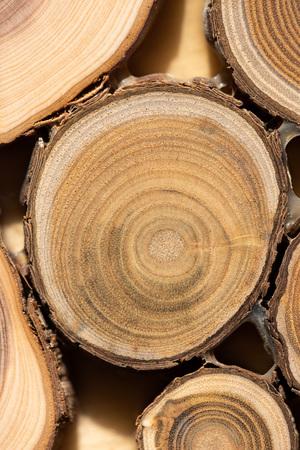 Core of juniper and sandalwood background Reklamní fotografie