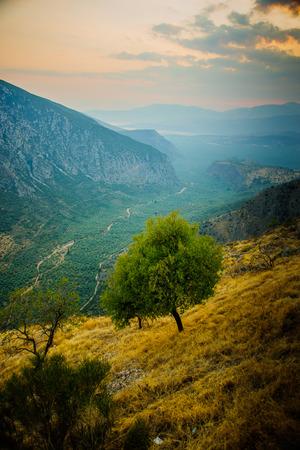 Valley near delphi, Greece photo