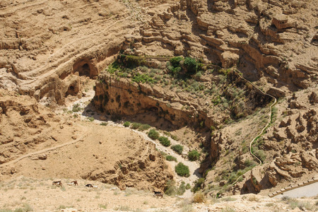 judean desert: Goats and water canal in Wadi Qelt, Judean Desert, Israel   West Bank