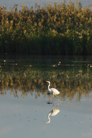nature reserves of israel: Various birds in Agamon Hula bird refuge, Hula Valley, Israel