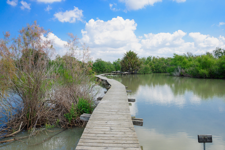 An elevated wooden footpath over a water pond, in En Afek Nature Reserve, northern Israel Reklamní fotografie