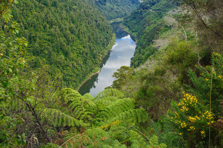 north island: View of the Whanganui River North Island New Zealand