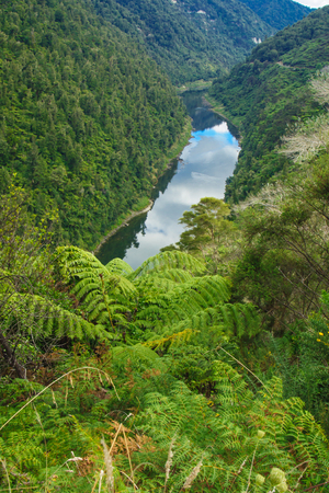 green river: View of the Whanganui River North Island New Zealand