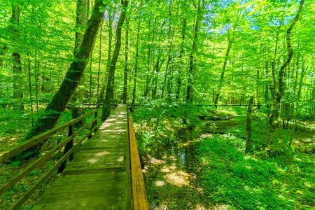 gora: A wooden footpath in in Lake Biograd Biogradsko jezero, Biogradska Gora national park, Montenegro