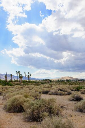 joshua tree  national park: Desert landscape in Joshua Tree National Park, California, USA