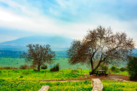 Landscape near Beit Keshet, in the Lower Galilee, Israel