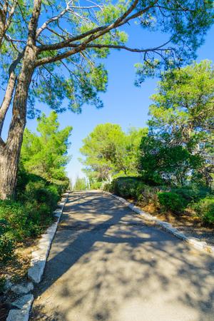 founders: View of Horshat Hameyasdim Founders Grove, a public garden in Haifa, Israel