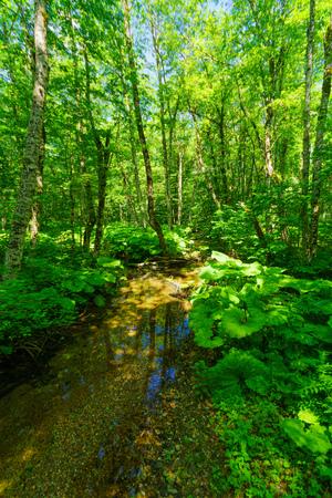 gora: A stream near in Lake Biograd Biogradsko jezero, Biogradska Gora national park, Montenegro Stock Photo