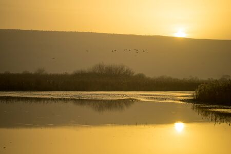 bird of israel: Surrise in the Agamon Hula bird refuge, with various birds, Hula Valley, Israel