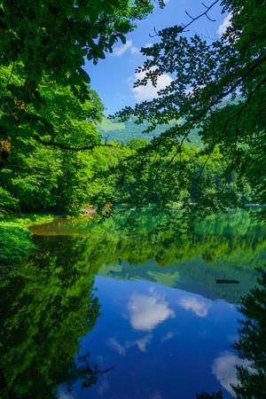 gora: View of Lake Biograd (Biogradsko jezero), Biogradska Gora national park, Montenegro