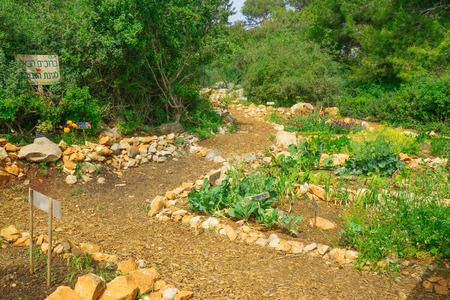 founders: Gan Hashavsheven (Vane garden), a community garden, part of Horshat Hameyasdim (Founders Grove), a public garden in Haifa, Israel. The texts are: welcome, cauliflower, cyclamen, beet, fennel