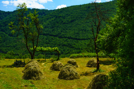 haystacks: Countryside and haystacks in the Piva Valley, Northern Montenegro
