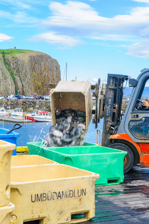 fishing scene: STYKKISHOLMUR, ICELAND - JUNE 20, 2016: Fishing port scene of daily catch loading, in Stykkisholmur, in the Snaefellsnes peninsula, west Iceland Editorial