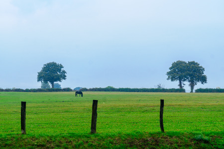 Countryside and a horse in a rainy day, in Nievre, Burgundy, France Stock Photo