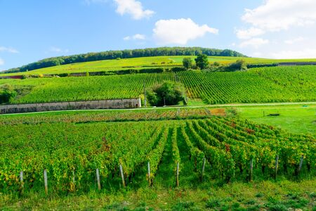 Countryside with fields and vineyards, in Cote dOr, Burgundy, France