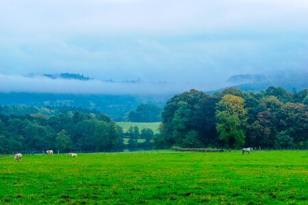 Countryside and cows in the Morvan Mountains, in Burgundy, France Stock Photo