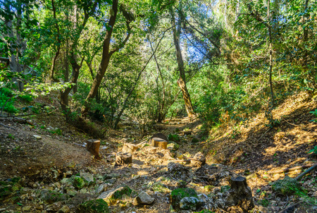 View of a marked footpath along Wadi Lotem. This valley is a place of peace, tranquility and greenery inside the busy city of Haifa, Israel