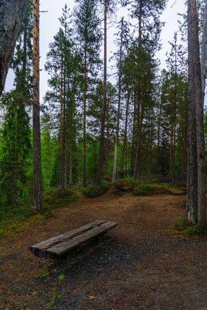 View of a footpath in the forest in Oulanka National Park, Finland