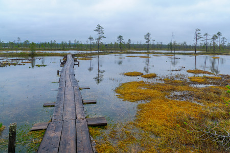 Footpath of duckboards over a marshland, along the Tunturiaapa Trail, in Pyha-Luosto National Park, Lapland, Finland