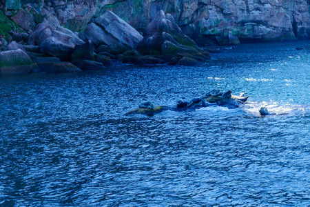 View of rocks and seals in the Bonaventure Island, near Perce, at the tip of Gaspe Peninsula, Quebec, Canada