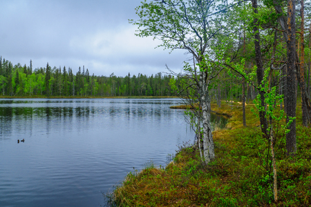Landscape of forest and lake in Oulanka National Park, Finland Stock Photo