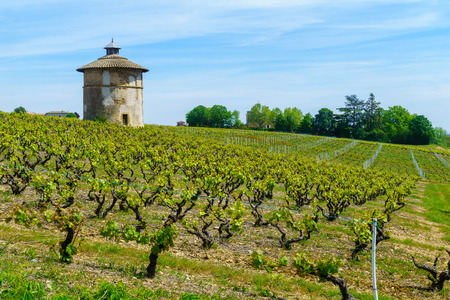 Landscape of vineyards and countryside, and old keep tower, in Beaujolais, Rhone department, France Banco de Imagens