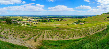 Panoramic landscape of vineyards and countryside in Beaujolais, Rhone department, France