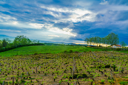 Landscape of vineyards and countryside in Beaujolais, Rhone department, France