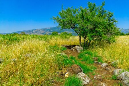 View of footpath and tree in the Snir Stream (Hasbani River) Nature Reserve, Northern Israel