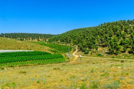Landscape of countryside in Meron, upper Galilee, Northern Israel