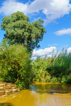 View of the Jordan River with Eucalyptus trees and other plants. Northern Israel