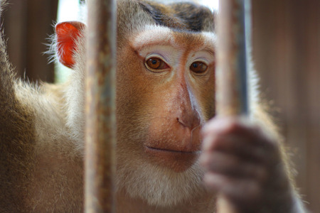 Monkey in cage photo