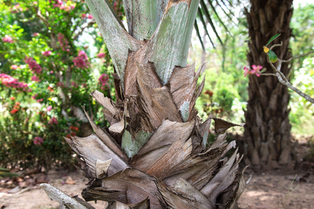 Close-up picture of palm tree trunk photo