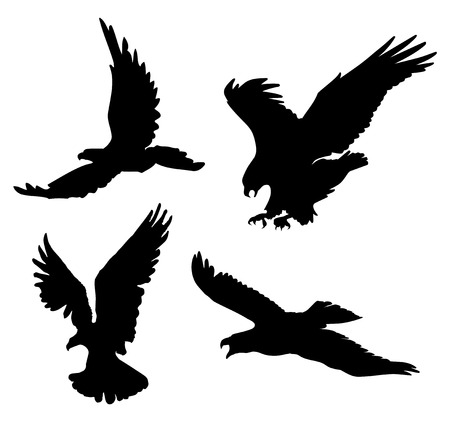 eagle flying: Flying eagles silhouettes on white background, illustration. Illustration