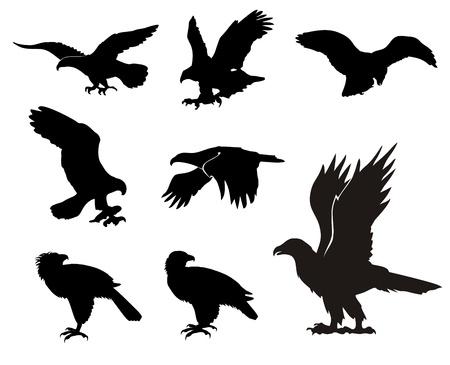 silhouette aquila: Vari eagle sagome isolati su sfondo bianco
