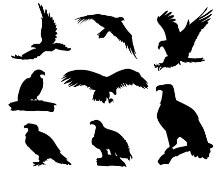 Various eagle silhouettes isolated on white background Illustration