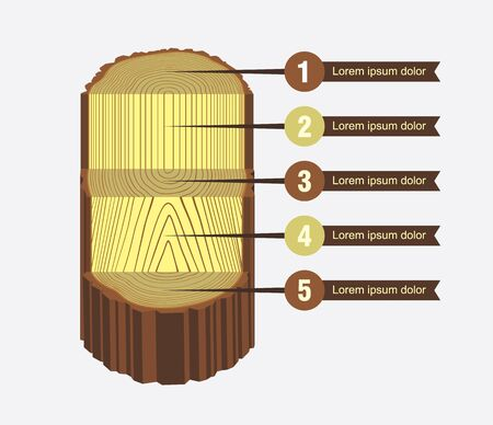 rings on a tree: Tree log sawing scheme vector illustration with options Illustration