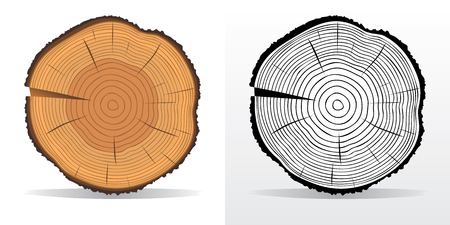 Vector illustration of tree rings textures and saw cut tree trunk