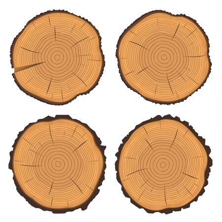 rings on a tree cut: Vector illustration of tree rings textures and saw cut tree trunk
