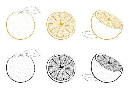 juicy fresh orange whole and cutaway. Set of black and white and color images of tropical fruit. Isolated vector on white background