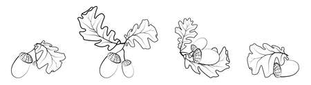 Set of oak autumn leaves with acorns. Oak Grove. Black and white vector in minimal style