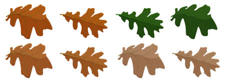 Set of oak autumn leaves in different colors. Oak Grove. Cartoon vector