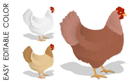 Cartoon Homemade chicken. Farm bird laying eggs. Colored vector isolated on white background. Ilustrace