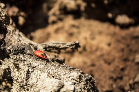 firebug: Firebug