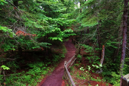 A beautiful trail in Taquemenon Falls State Park in Upper Penninsula of Michigan  Stock Photo