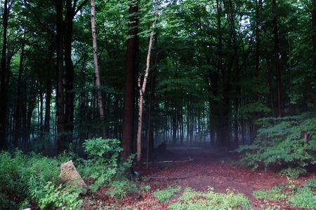 guarding: Mist in the woods