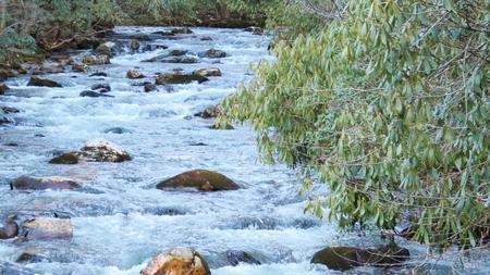 Smoky Mountain Stream photo