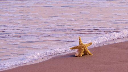 波のヒトデ 写真素材