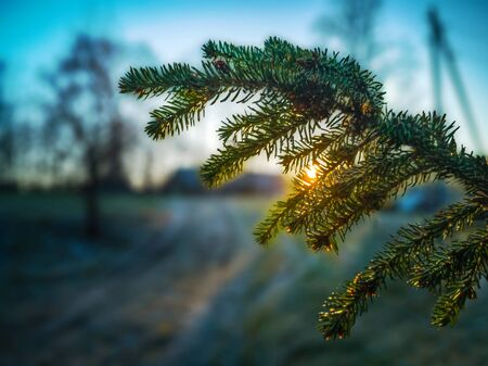 Sun Beam Shining Through the Branch in Early Winter Morning with Snow on Ground, Sunrise - Isolated Branch with Blurry Background Stock Photo