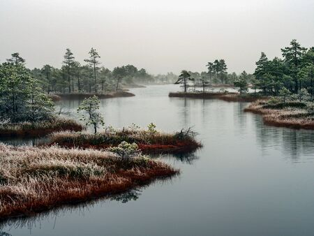 Pine Trees in Field of Kemeri moor in Latvia with a Pond in a Foreground on a Cold Winter Morning with some Frost on them